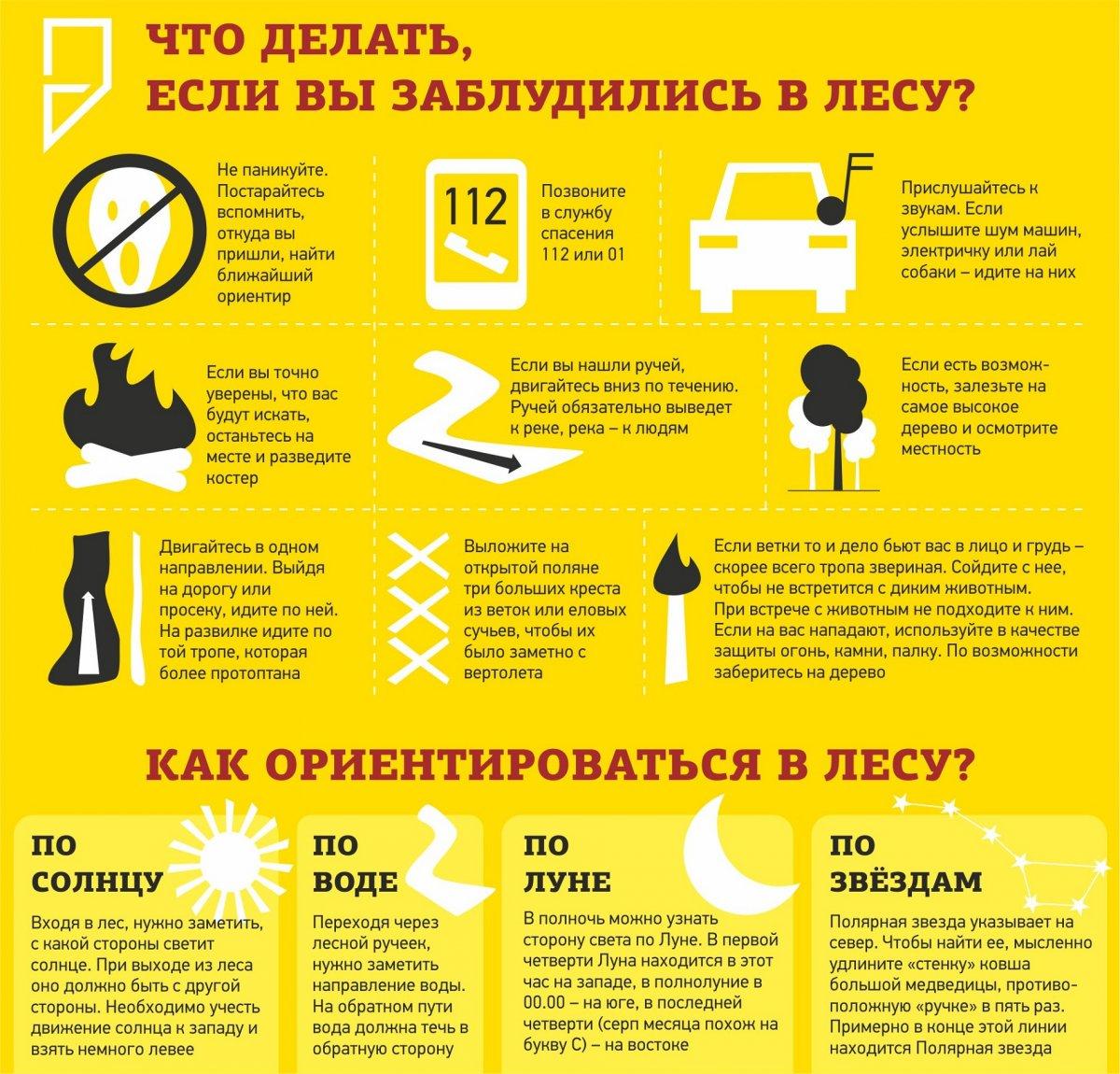 Памятка Правила поведения в лесу