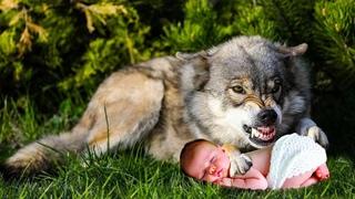 Вложив младенца в пасть волку, мать дождаться не могла когда тот начнет его жрать, но вместо этого..
