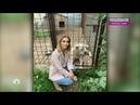 Идет на поправку Ольга Орлова рассказала о состоянии бежавшего за машиной пса