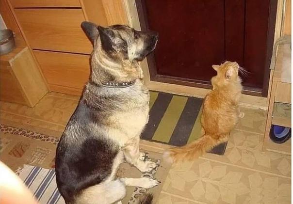 Прошу не мучайте вы люди, Тех кто Вас слегка слабей.Тех кто Вас так сильно любит,Сидит ждет дома у дверей.Кто не бросит Вас по жизни, Не обманет, не придаст.И даже в трудную минуту,Лапу дружбы