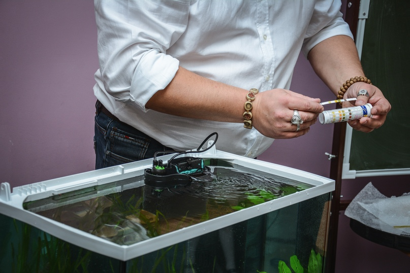 В Православной гимназии 03.12 прошел мастер класс по уходу за аквариумом с живыми растениями и рыбками!, изображение №18