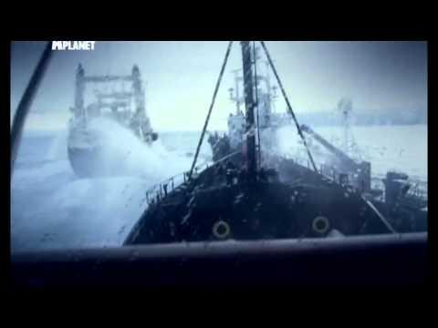 Китовые Войны В течение 4 ех кампаний