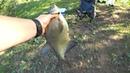 Рыбалка на Поплавок! Рыбалка на КАРАСЯ! Лещ Краснопёрка Густера Плотва