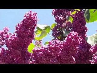 Ритуал - онлайн на богатство на цветущие кусты.  К Ганеше.