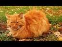 В.Сюткин_ Осень - кошка в рыжих сапогах