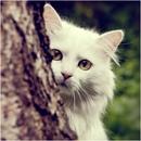 Личный фотоальбом Насти Семёновой