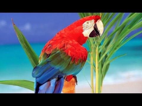 Дикие попугаи Австралия Документальный фильм
