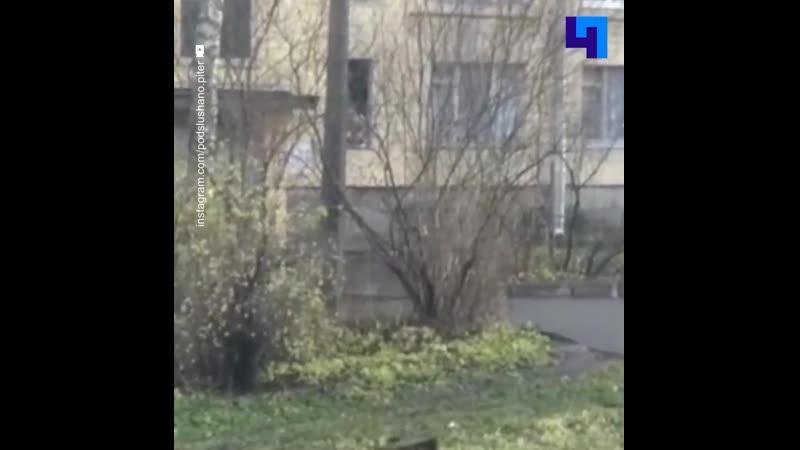 Очевидцы публикуют видео из Колпино где отец взял в заложники шестерых детей