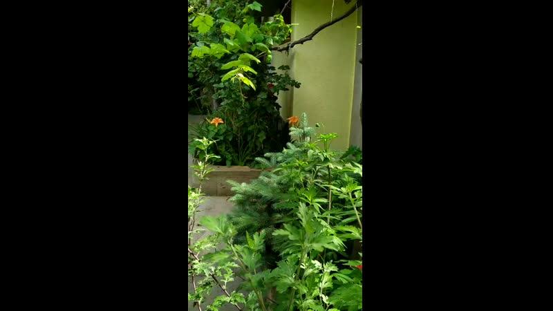 Наш зелёный дворик