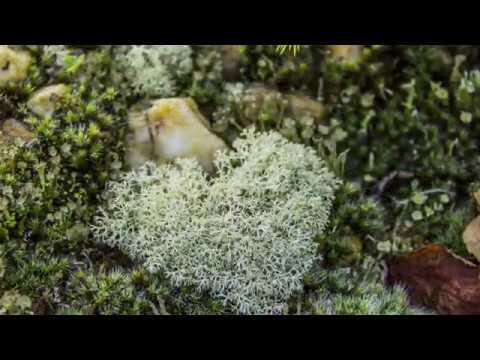 Mushrooms in the moss 4k