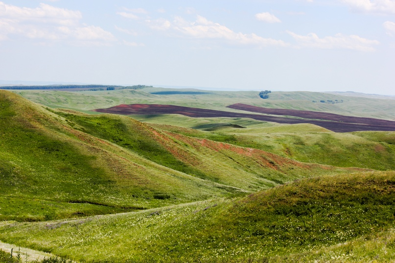 Экспедиционная оценка эффективности землепользования в Оренбуржье, изображение №14