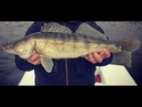 Рыбалка в Ноябре на Спиннинг. РАЗДАЧА СУДАКА