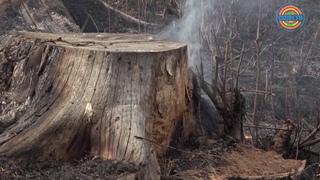Треть пожаров в Солнечногорске случается из-за пала травы