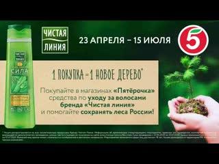 Сохраним живые леса России вместе!