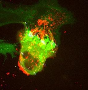 Вирусы разного рода (на фото SCP-742) были допустимы в первой тысяче, но теперь это моветон