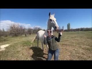 Тайган. Девчата. Танцующий конь на фоне заката