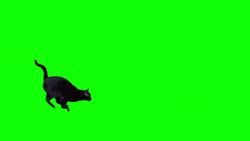 Black cat jumping against green screen HD EXCLUSIVE