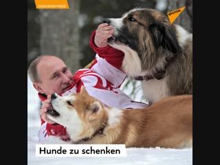 Putin und seine hunde