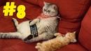 8 Смешные коты 😹 Приколы с кошками 2021 🤣 Смейся до слез 😂 Смешные котики