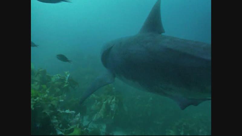 BBC Прогулки с морскими чудовищами 2003 2 Серия