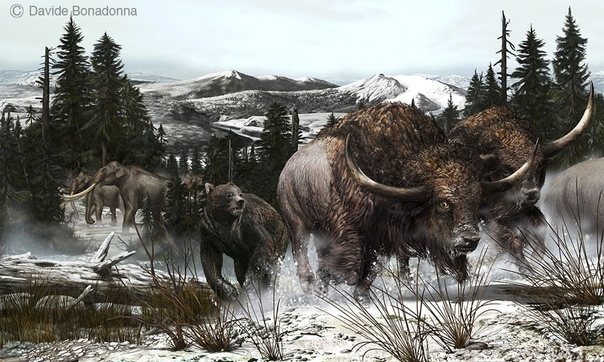 giant animals north america - HD2012×1237