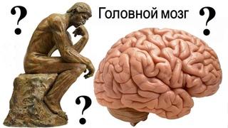 Неразгаданные тайны мозга (рассказывает Татьяна Черниговская)