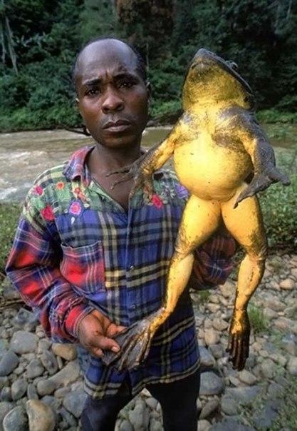 пенопласта самые большие жабы в украине фото расскажите
