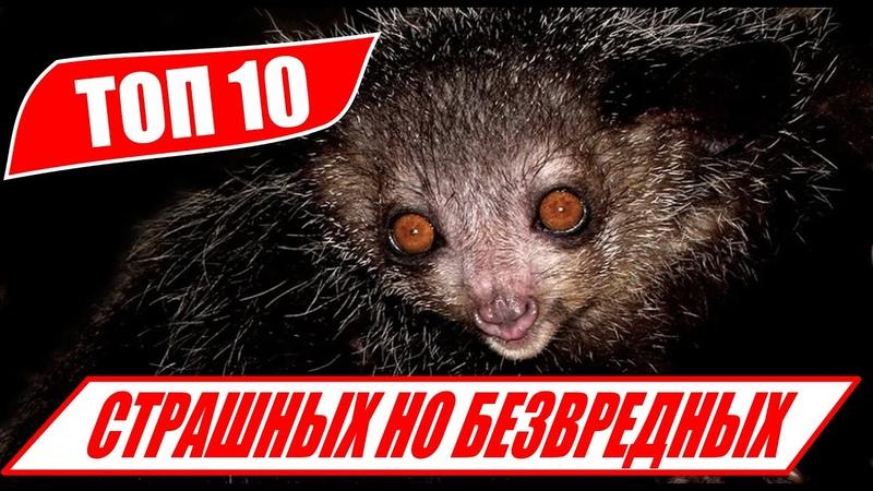 ТОП 10 самых СТРАШНЫХ но БЕЗВРЕДНЫХ животных для человека