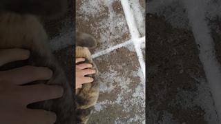 Пушистик/Кошечка/Милая кошка/котенок/ Cute cat/ kitten/ fluffy cat
