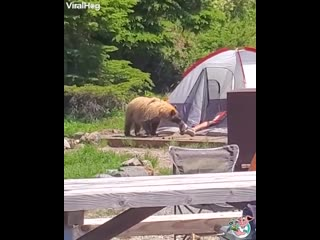 I bet this dude hard a hard time falling back asleep! 🐻⛺🚶♂️ i bet this dude hard a hard time falling back asleep! 🐻⛺🚶♂️