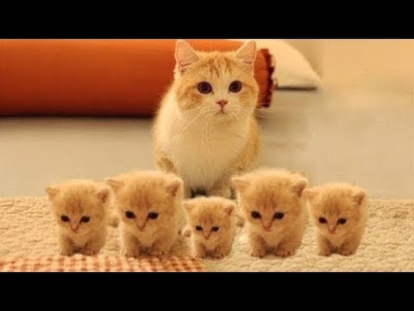 Super cute kittens Episode 8 Cutest Funniest Pets Cute And Funny Animals