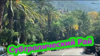 Абхазия. Сухум, абхазский рынок 2020. Собираем мини кокосики.