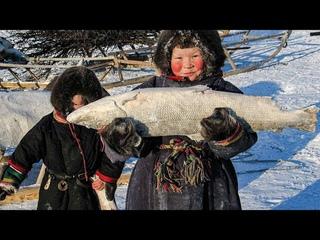 Как ловят рыбу Коренные Народы. Сети, невод, удочка. Секреты Ненцев Ямала и Крайнего Севера | Факты