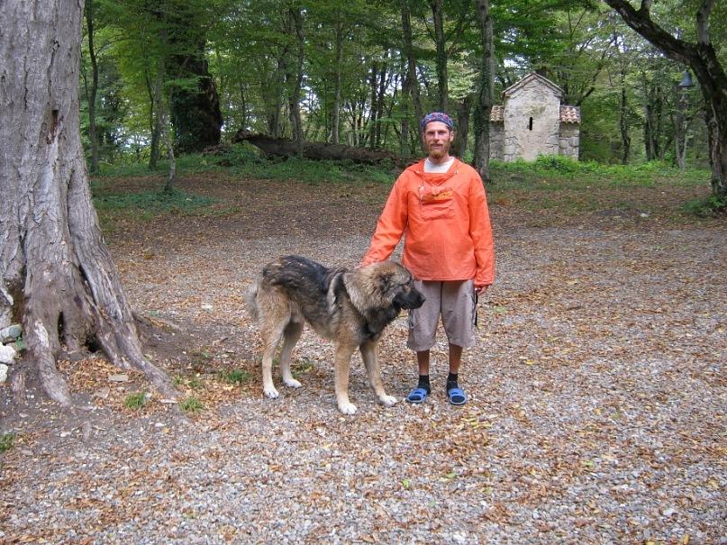 в грузинском монастыре грузинская овчарка