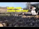 По овцам, по долам