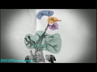 BBC Путешествие человека 1 За пределами Африки Документальный 2009