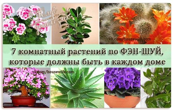 Цветы в квартире по фен шуй