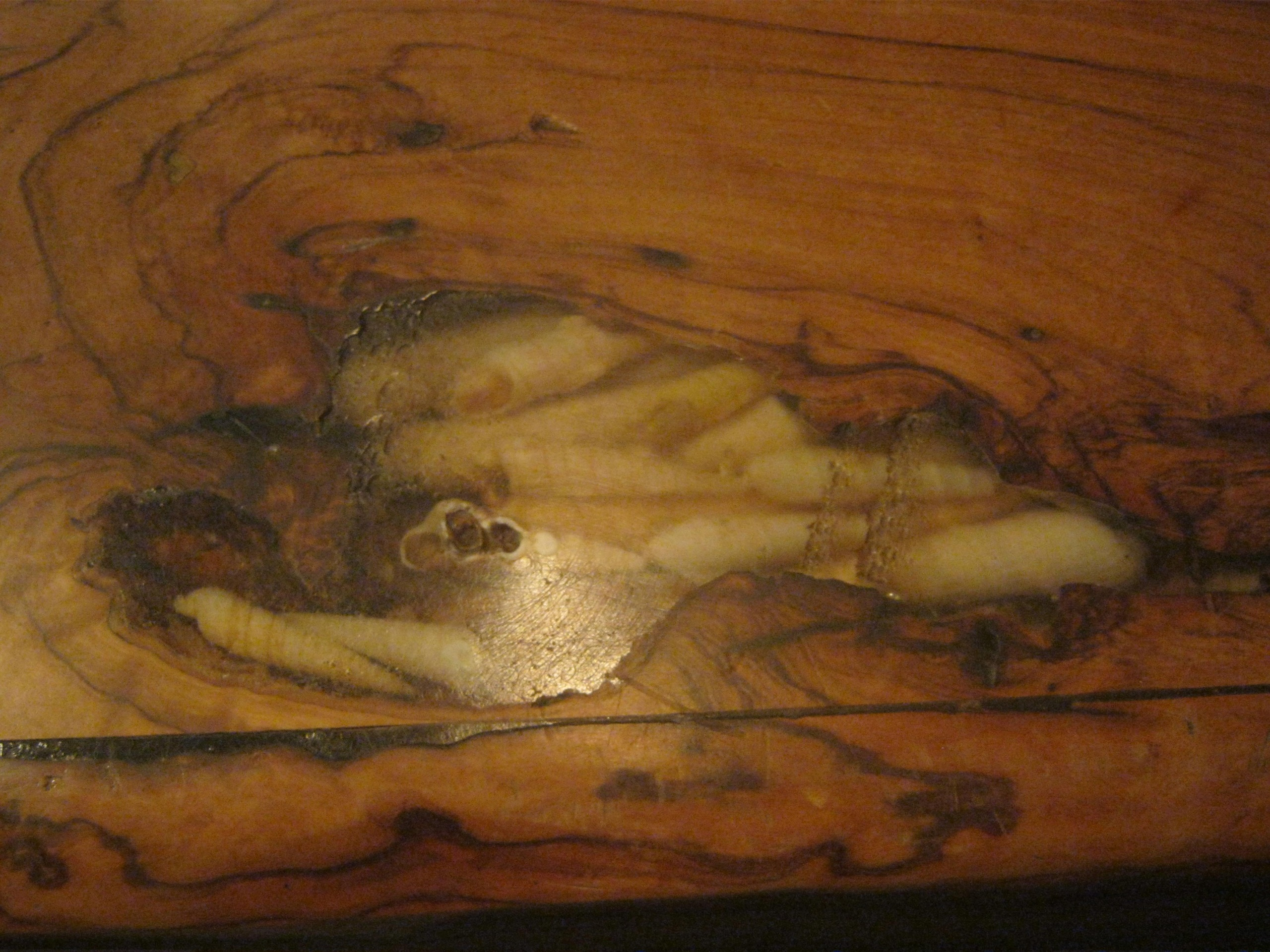 впечатанные морские ракушки при вторжении на Кипр