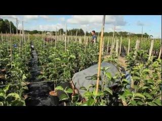 Le Salon du Végétal à Angers : au coeur de la 1ère région horticole de France