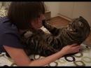 Кот не хочет обниматься и целоваться Cat doesn't want to hug and kiss