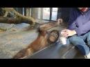 Реакция обезьяны на фокус Смешно до слез