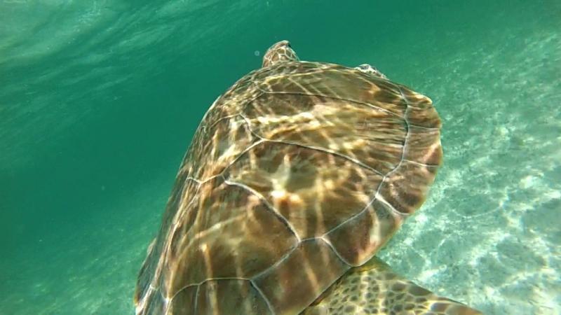 Akumal swimming with turtles