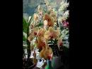 Орхидеи дома Удобрения для орхидей Greenworlb