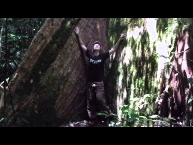 Magie stromů Které a proč je objímat