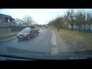 Dog vs Car