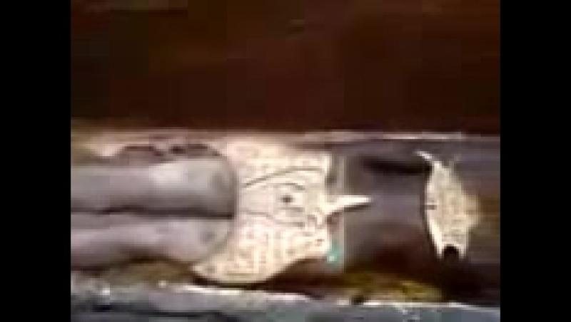 В Иране найдена гробница возрстом 12 000 лет!