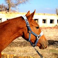 лошади в ростовской области