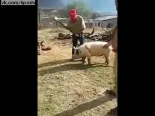 Мужик пытается убить топором свинью, но вырубает им себя / Guy Nearly KO's Himself Trying To Kill A Pig