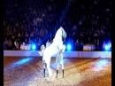 Lippizaner Hengst springt Kapriole in Zeitlupe Lipizzaner stallion jumping caper in slow motion