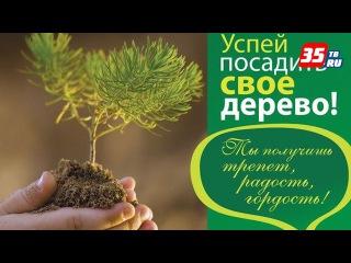 Зелёный взрыв «ЭКОбомбы» предлагают организовать в Череповце